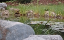 Hausgarten mit Teich